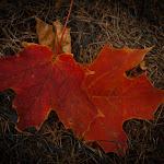 Fall in MI, 09 (93 of 122)dng.jpg