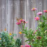 Gardening 2011 - 100_9500.JPG