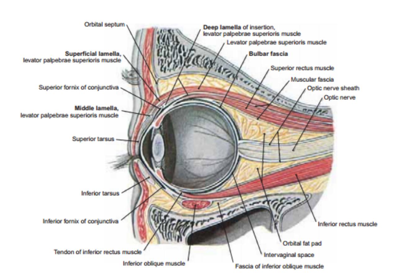 Anatomi Mata Pada Tubuh Manusia