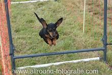 Huisdierreportage Hondendag Uden Dierendag (4 oktober 2008) - 15
