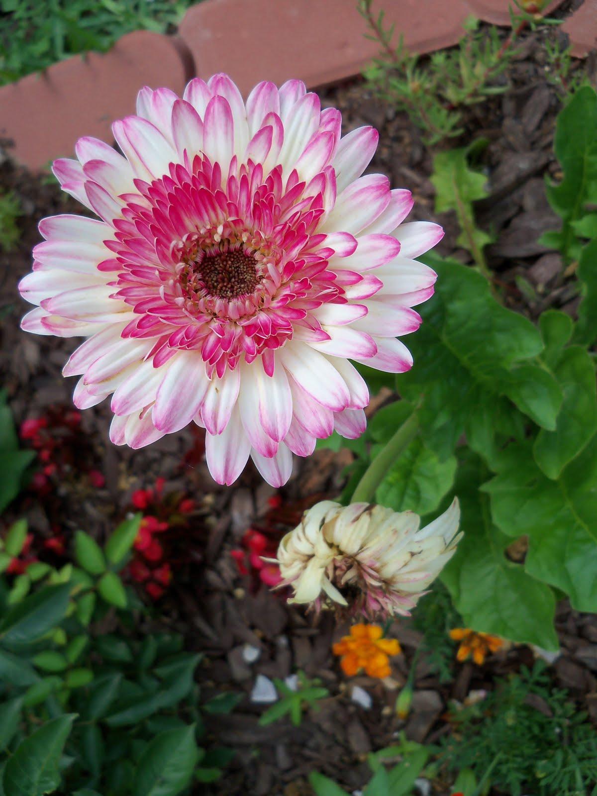 Gardening 2010 - 101_1621.JPG
