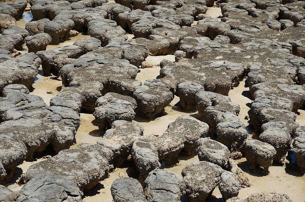 hamelin-pool-stromatolites-5