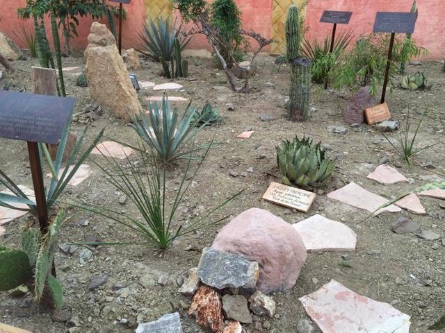 Regi n mixteca distrito de huajupan jard n etnobotanico for Distrito ciudad jardin