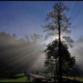 Smoky Mountain Rays by Vickie Barnhill - Landscapes Travel ( lone tree, tree, sunrays, cades cove, smoky mountains )