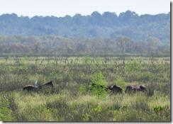 Wild horses-5