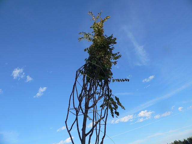 Tree Planting November 2010 - 110410%2B005.JPG