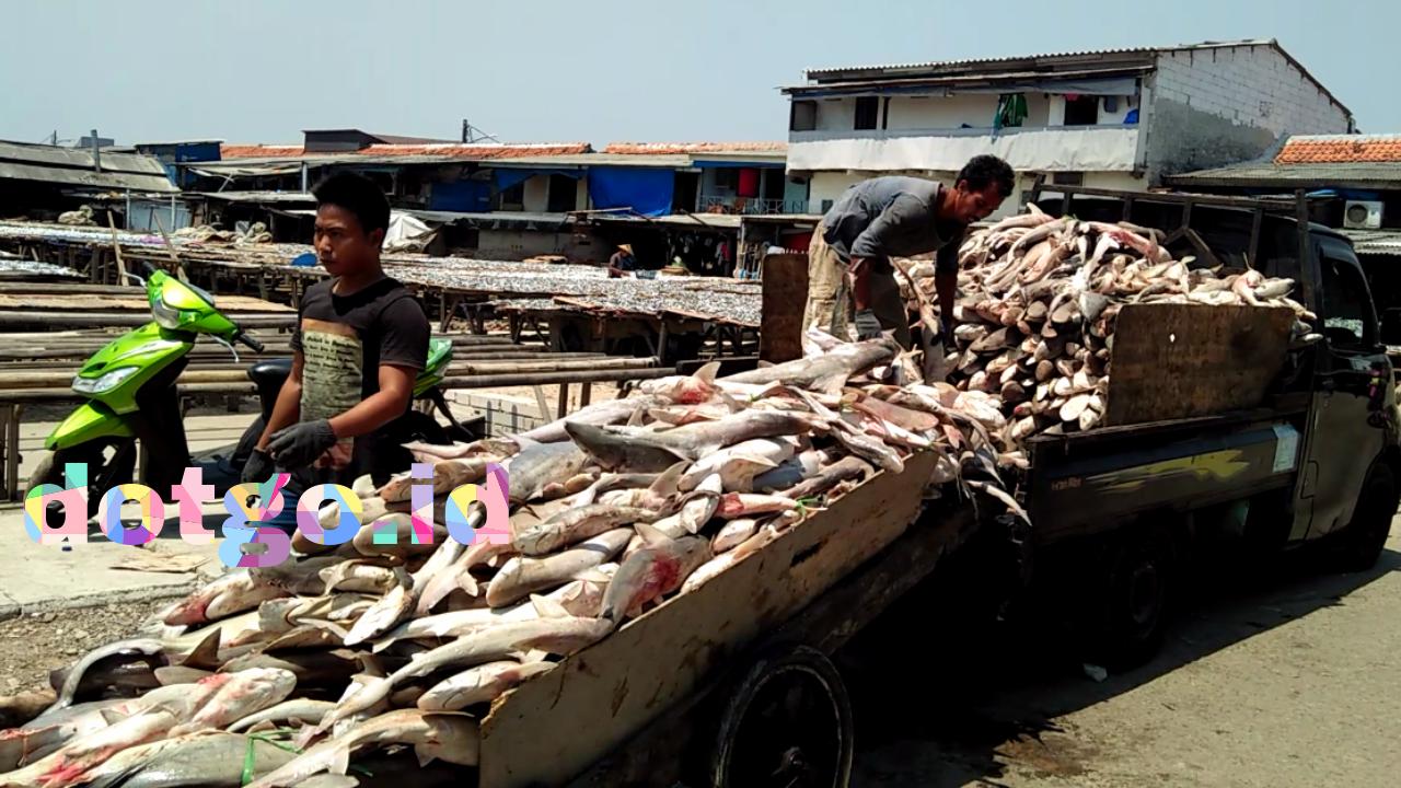 Industri Pengolahan Ikan Asin Muara Angke Sentra Penghasil