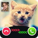 Cat Call You : Cat Video Call & Video Call prank icon
