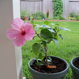 Gardening 2010, Part Two - 101_2807.JPG