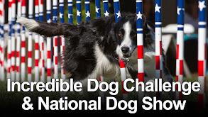 Incredible Dog Challenge & National Dog Show thumbnail