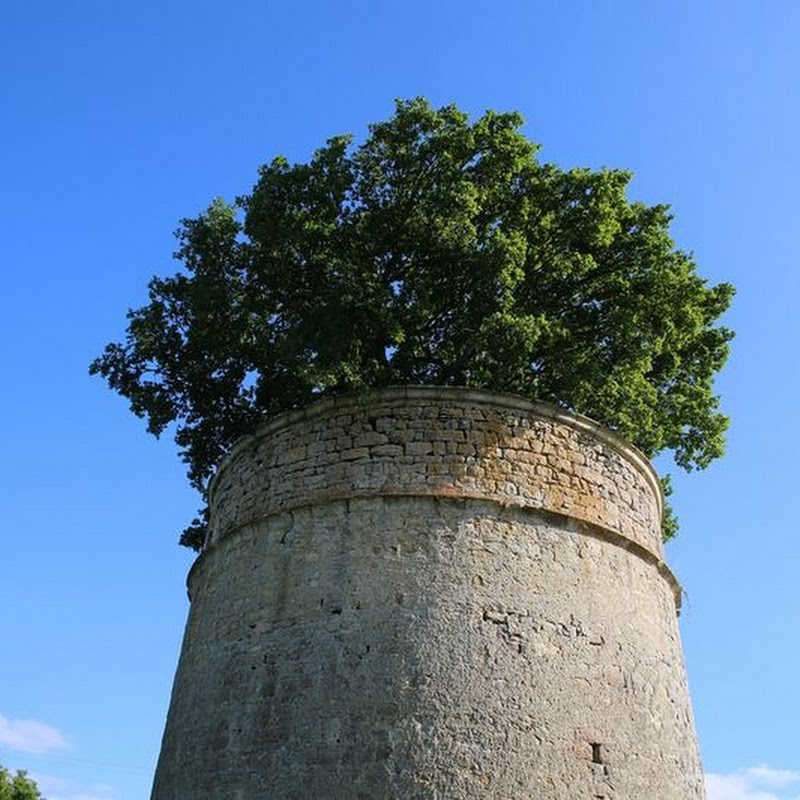 The Oak in a Dovecote, Béceleuf
