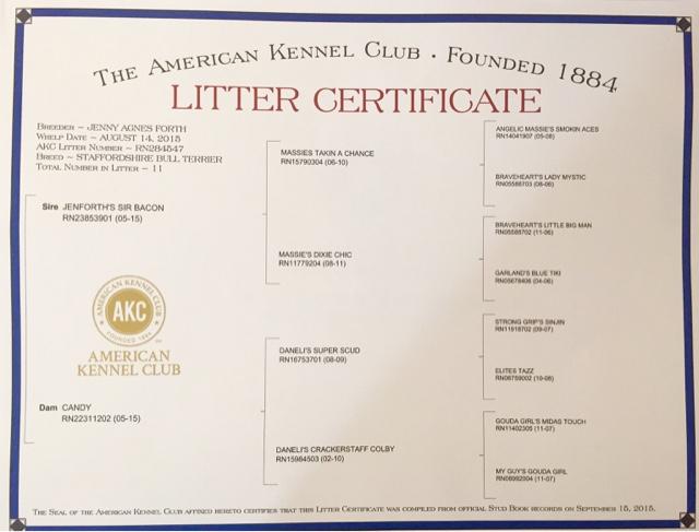 Black Jewel Staffies : AKC English Staffordshire Bull Terrier