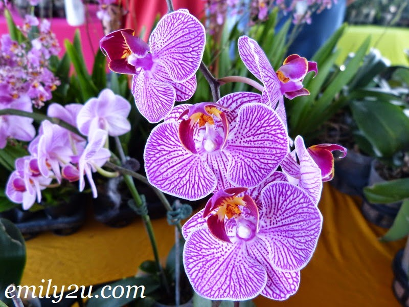 orchid exhibition