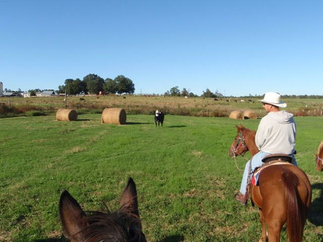 19 Oct 2008 - group ride at Anderson Creek Hunting Preserve