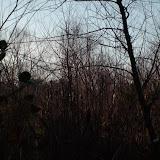 2011 December - SANY1266.jpg