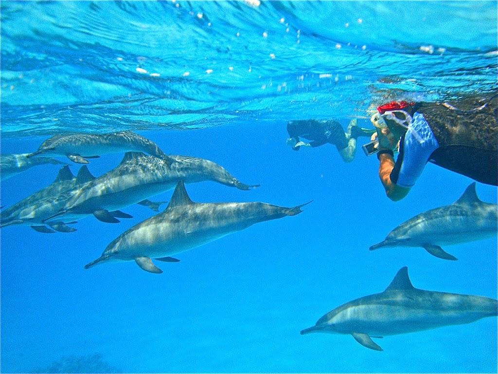2 personnes nagent avec des dauphins