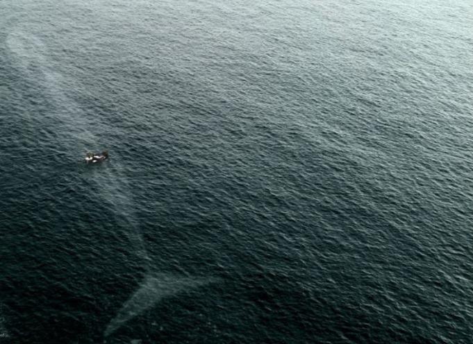 Imagens que o farão pensar duas vezes antes de entrar na água 08