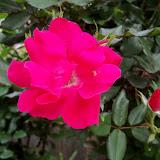 Gardening 2011 - 100_7191.JPG