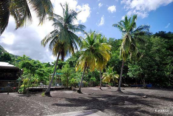 Под пальмами лучше не спать - кокосы так и норовят упасть на голову