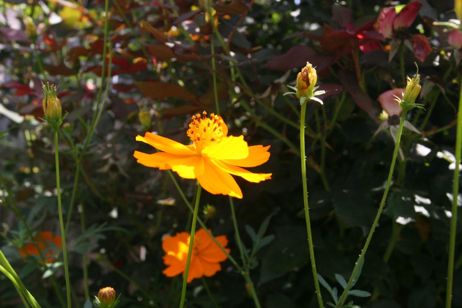 Gardening 2012 - IMG_3806.JPG