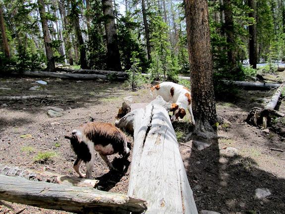 Boulder and Torrey sniffing around