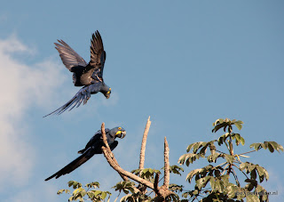 Brazilie Pantanal
