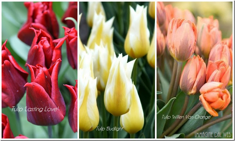 Promesse de fleurs 4