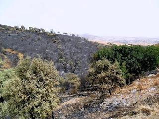 Exercice de simulation de lutte contre un incendie de forêt organisé à «El-Fernane» (Berrouaghia)