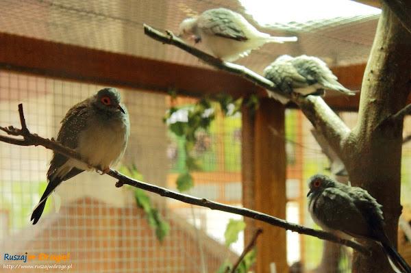 Tuchlino Park Egzotycznych Zwierzaków - ptaszki