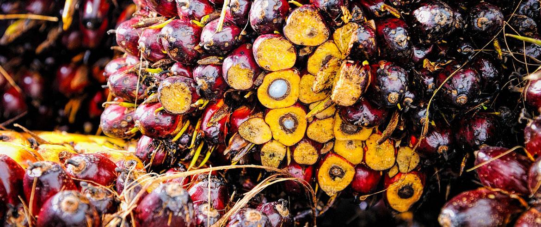 palm_oil_skin_care