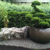 Mietwohnung in Turgi. Gartenbonsai im Pflanzgefäss