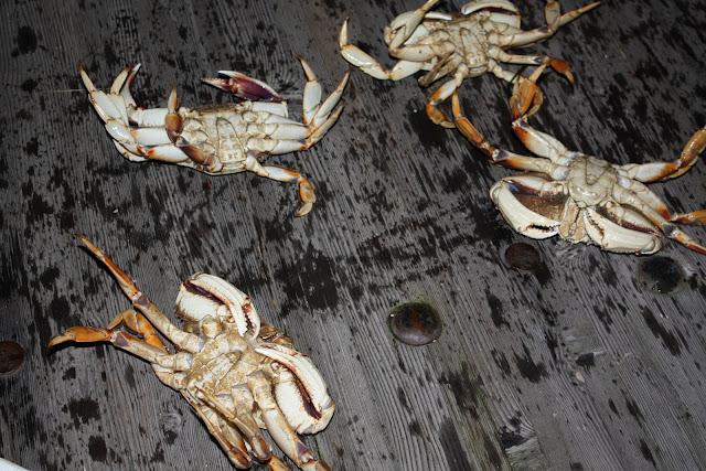 2010 Crab Feed - IMG_5590.JPG
