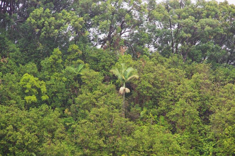 06-23-13 Big Island Waterfalls, Travel to Kauai - IMGP8858.JPG