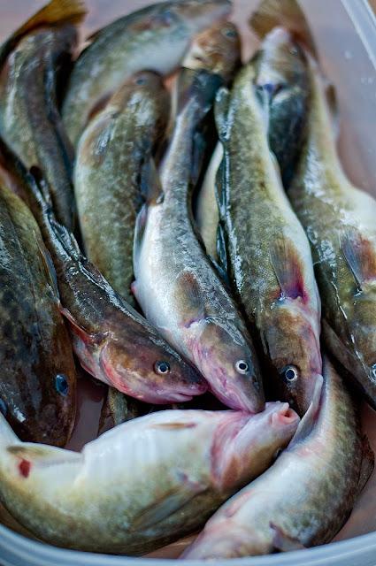 какая рыба клюет в конце