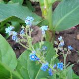 Gardening 2011 - 100_7707.JPG