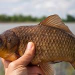 20140517_Fishing_Bochanytsia_028.jpg