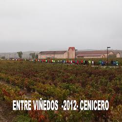 V Carrera EntreViñedos 2012 (Toño Aguado)