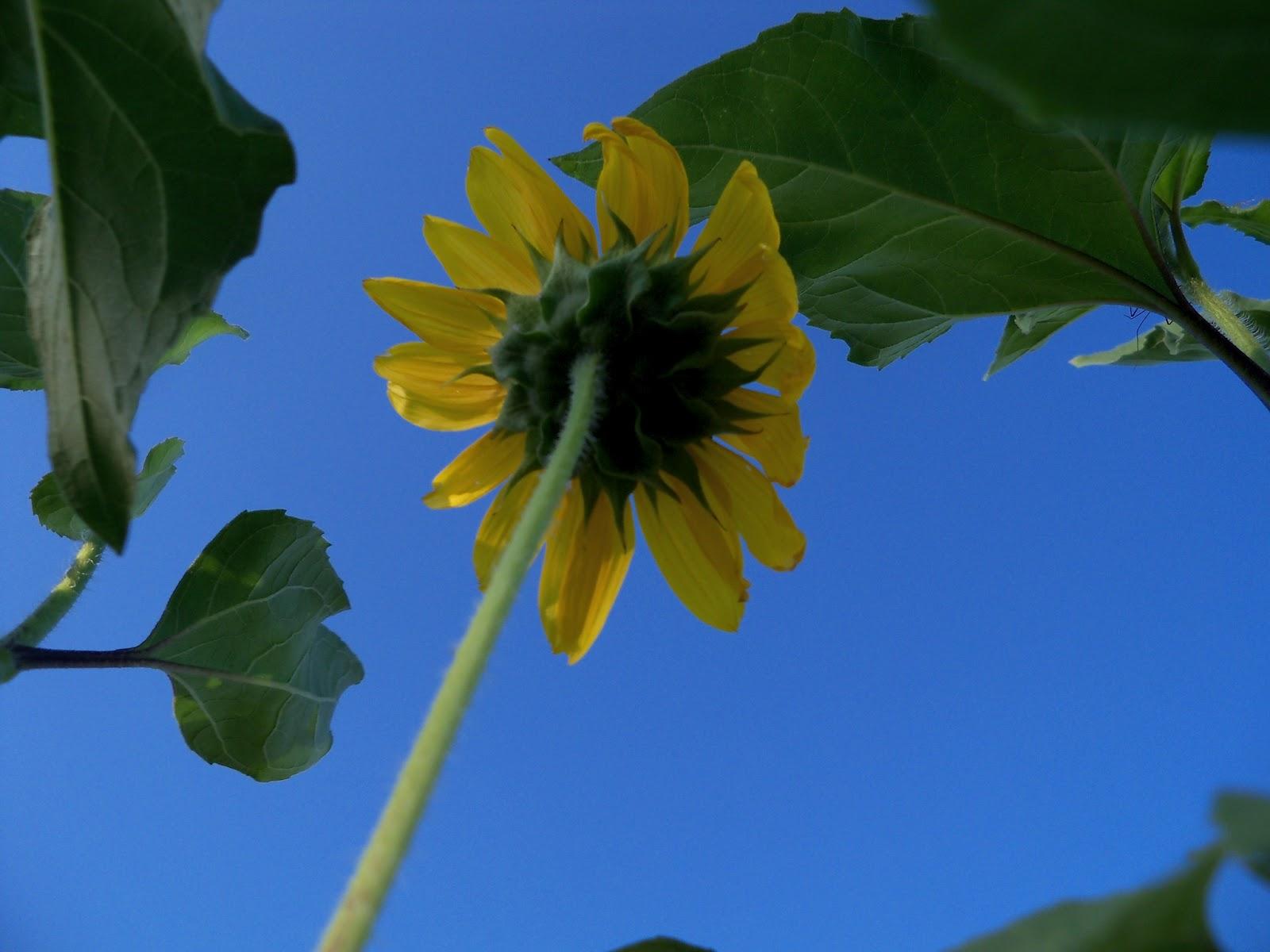 Gardening 2012 - 115_2673.JPG