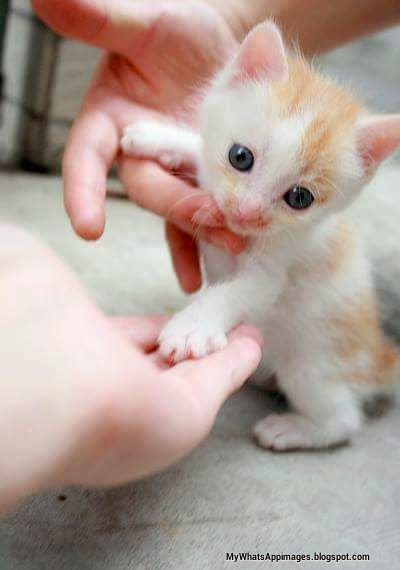 Funny baby cats images very cute cats whatsapp images awesome cute lovely cats little cats make funny photos images for fun sweet pictures for funny baby cat cat images making fun voltagebd Gallery