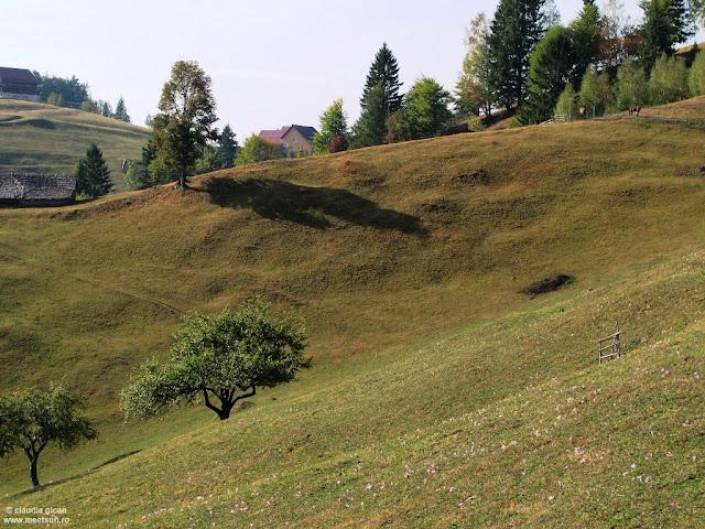 brânduşe mari şi roz împânzesc colinele