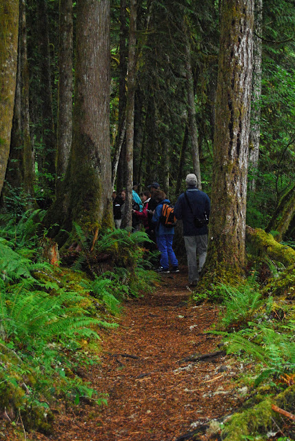 Walking between the dense tree on the Horseshoe Bend Trail / Credit: Bellingham Whatcom County Tourism
