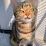 didik dwi's profile photo