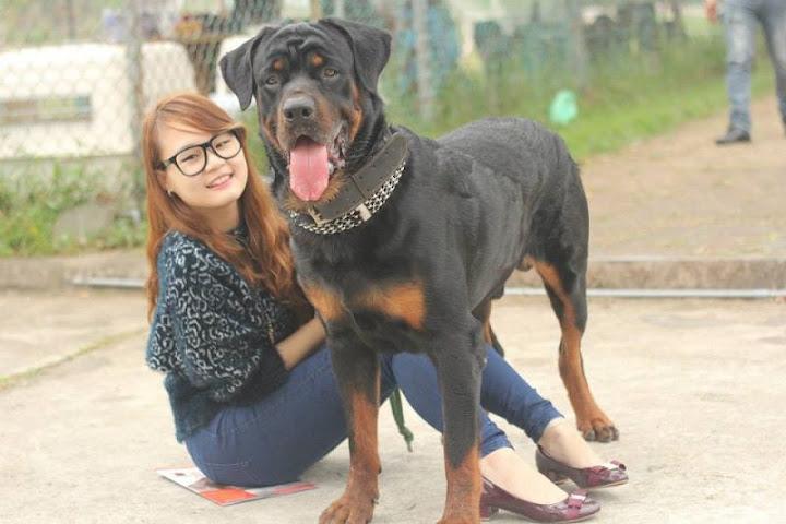 tùng lộc pet - trại chó rottweiler ở Hà Nội