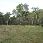 Large open area at Clover Flat