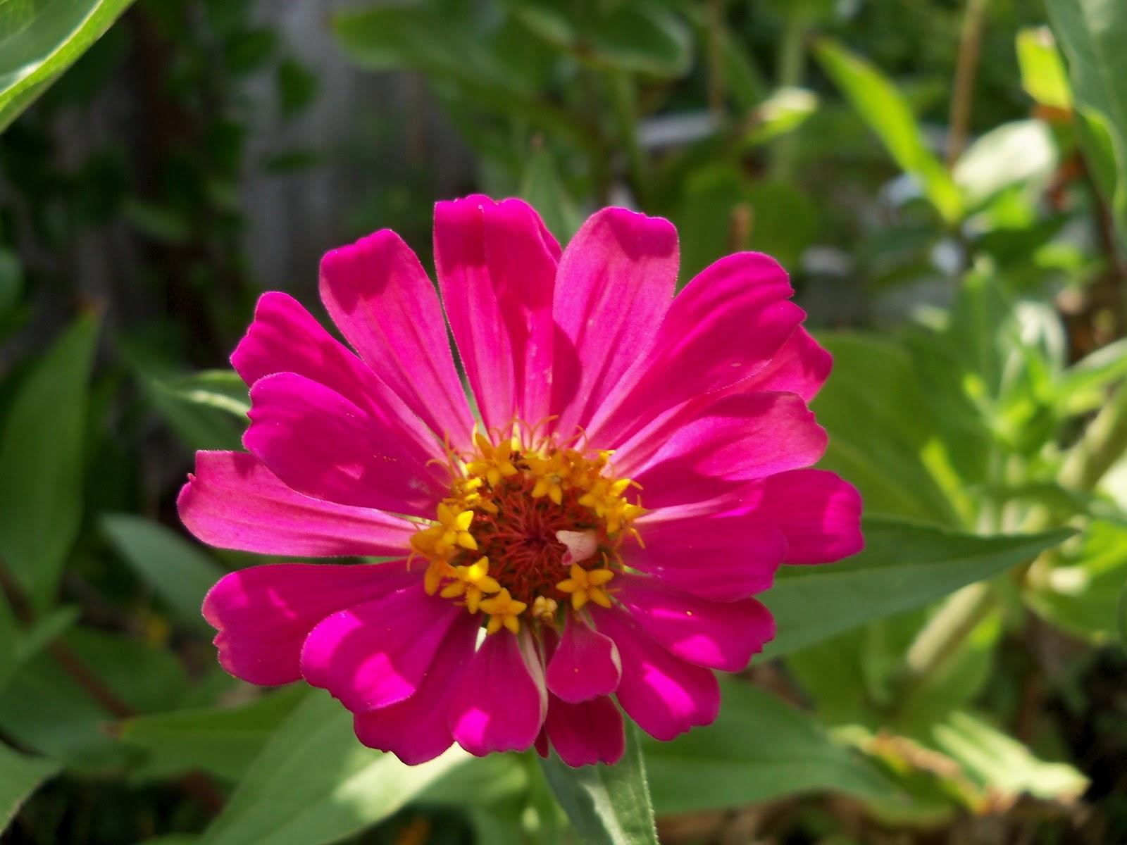 Gardening 2011 - 100_0087.JPG