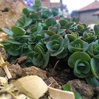 primavera-luminasioIMAG0221.jpg