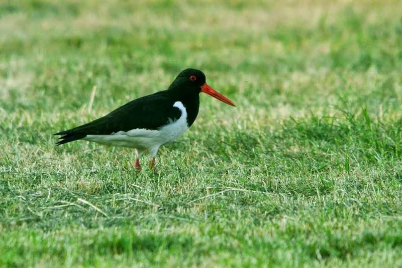 Vogels en dieren - IMG_9143.JPG