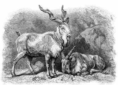 Horned Animals ! दुनिया के 10 सर्वश्रेष्ठ सींग वाला जानवर | World's 10 Best Horned Animals