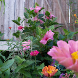 Gardening 2012 - 115_2047.JPG