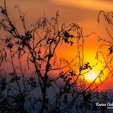 Ольховый закат